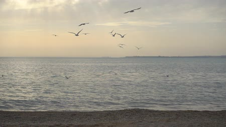 judgment day : Slowmotion, beautiful sky and birds over water, fhd 240 fps Stock Footage