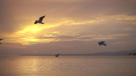 judgment day : Slowmotion, birds fly against beautiful landscape, fhd 240 fps Stock Footage