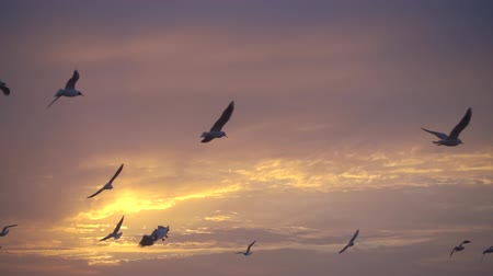 yargı : Birds fly against beautiful sunset, slowmotion, fhd 240 fps