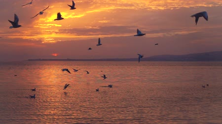 yargı : Birds slowly fly against beautiful sunset, Full HD slowmotion, 240 fps.