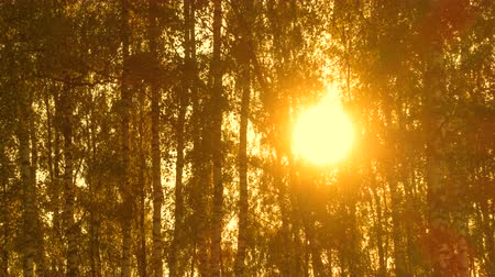 Time lapse of trees in sunlight, forest at beautiful sunset. 4k pro res. Wideo