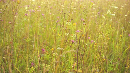 Beautiful wild meadow in pastel tones, fog and sunshine. 4k pro res. Wideo