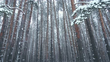 Snowfall in forest, snow covered trees. Seamless.