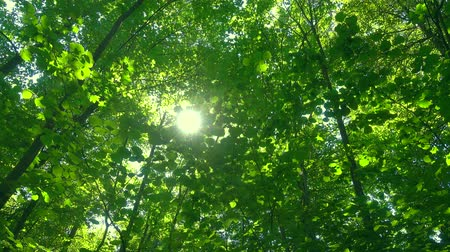 Sun through green leaves.