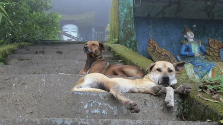 pawed mammal : Two dogs resting lying on the stairs