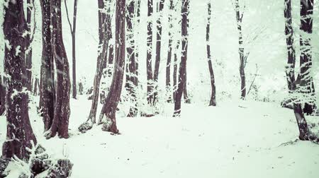 winter forest full of snow