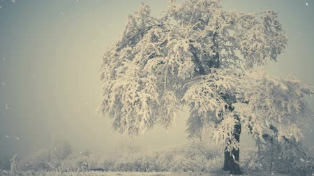 lonely frozen tree under falling snow