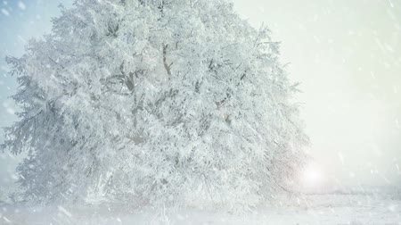 frozen tree at winter meadow snowfall