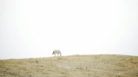 égua : White horse in fog