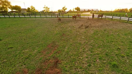 padok : Bluegrass horse farm Stok Video