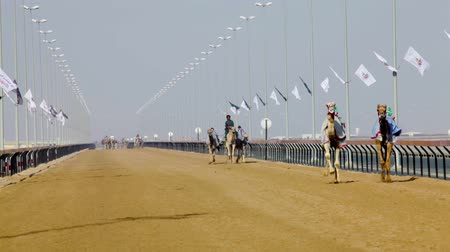 гоночный : Camel racing in Dubai Стоковые видеозаписи