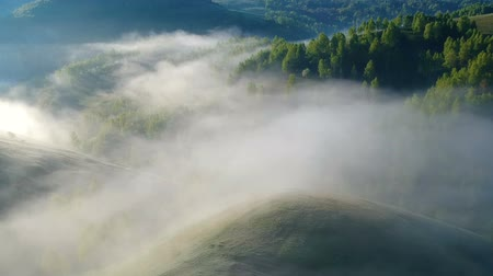 Трансильвания : Sunrise aerial view of the foggy forest, in Apuseni Mountains