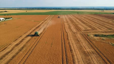 agro : Summer view of combine harvester machine, in the romanian fields. Aerial view of harvesters Stock Footage