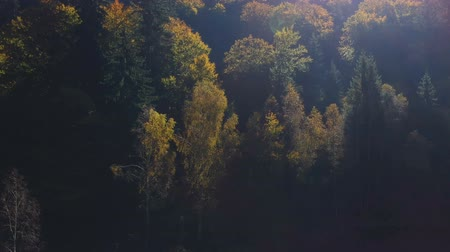 ルーマニア : Aerial view above the colorful forest, in autumn