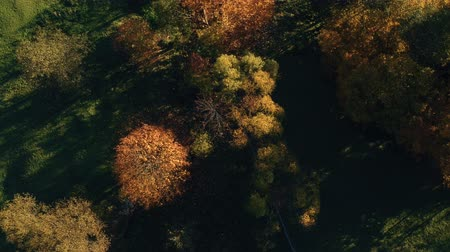 Румыния : Aerial view above the colorful forest, in autumn