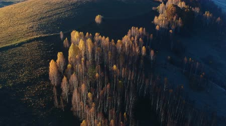transilvânia : Aerial view above the colorful forest, in autumn