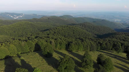 Aerial view above the mountain forest at Ranca. Top view of summer green trees in forest background