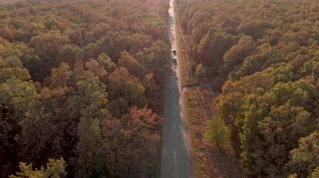 Autumn aerial view of the road cutting through the colorful forest, in the warm sunset light