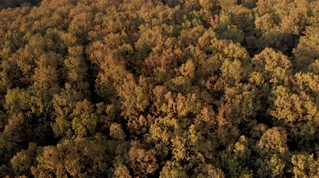 Autumn aerial view above the colorful, rustling forest, on a windy day 무비클립