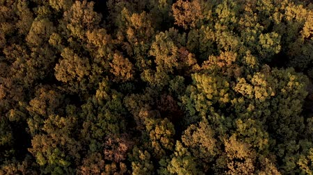 transilvânia : Autumn aerial view above the colorful, rustling forest, on a windy day Stock Footage
