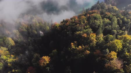Aerial view of the beautiful, colorful forest, in Slovenia Стоковые видеозаписи