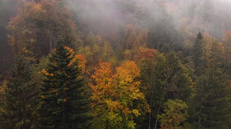 Aerial view of the beautiful, colorful forest, in Slovenia Vidéos Libres De Droits