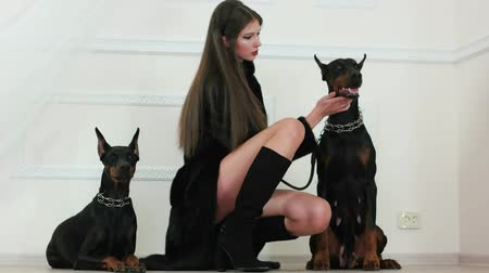 ceket : beautiful girl sitting between two dobermans and patting one of them, girl with long brown hair wearing black fur coat and suede boots on high heels holding dog on leather leash, domestic dogs Stok Video