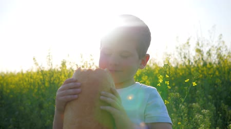 famished : boy eating bread in park outdoors, hungry happy child eats food on meadow in backlight, youngster with loaf bread in hand on background field, nice kid close-up in sunny day, slow motion