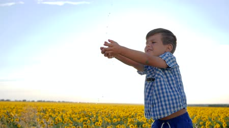alfândega : kid washes his arms under running water in backlight, child catches clear water in slow motion, boy catches hands transparent water drops on background field with sunflowers
