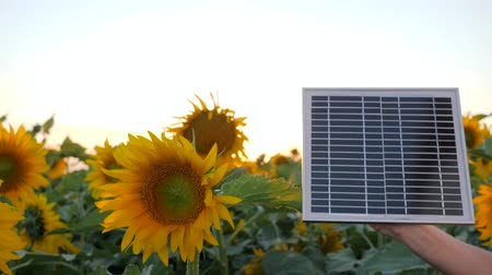 alfândega : energy-generating technology, solar battery in arm beside field in slow motion, hand keep solar panel on background blue sky and sunflowers, solar cell close-up in backlight