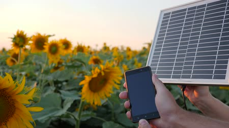 economical : cellular telephone and solar battery in arms people beside field in slow motion, hands keep solar panel on background blue sky and sunflowers, charging on mobile close-up in backlight