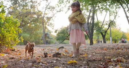 podzimní : child walking with small dog on leash in sunny day on background of green trees at autumn park