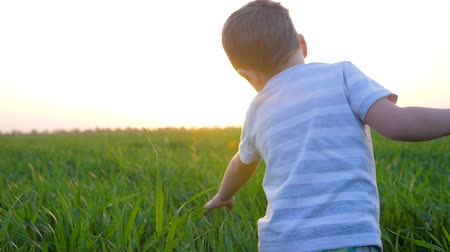 open sky : child walks outdoors in summer field and touches fresh grass in morning in sunlight Stock Footage
