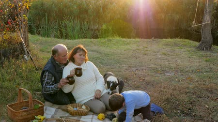 ježek : elderly woman with man drinks tea near dog and grandson playing with a hedgehog outdoors, family vacation at sunset Dostupné videozáznamy