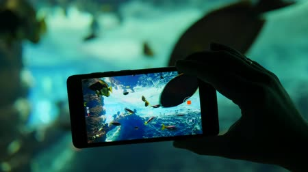predatório : mobile phone shoots an aquarium with a variety of different fish on the video camera close-up Vídeos