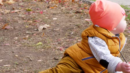 ground : childhood, little boy is playing with a small tree branch sitting on ground with yellow leafs in autumn park