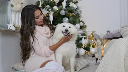 happy socks : dog friend of a man, girl in cozy warm sweater with a fluffy pet sits near Christmas tree