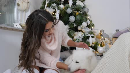 new clothes : girl brunette in long sweater have fun with white pet on floor under green fir tree