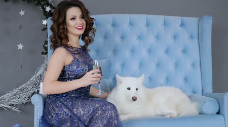 samoyed : holiday, chic woman in evening dress sit on sofa near Samoyed dog with wine glass in hand at photo session Stock Footage