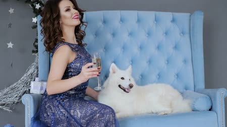 samoyed : New Year photo session with pet, girl in elegant clothes with champagne in wineglass sits on couch at room