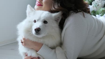 samoyed : beautiful girl hugs dog close up lying on floor near decorated christmas tree on winter holidays