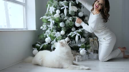 samoyed : Xmas, beautiful young woman decorates Christmas tree beside white dog in eve new year at home
