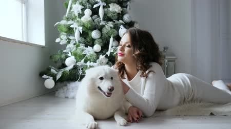 samoyed : christmas morning, woman poses with white dog in cozy atmosphere on photo shoot near decorated new year tree