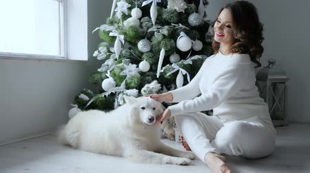 samoyed : christmas girl with pet posing on background of Xmas tree with white toys in a cozy atmosphere at eve new year Stock Footage