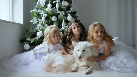 рождественская елка : New Year, girlfriends in elegant dresses hug a dog on background a Christmas tree with white balls