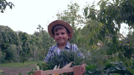 brinjal : autumn harvest, little boy in straw hat carries a wood crate with different fresh vegetables on a background of garden Stock Footage