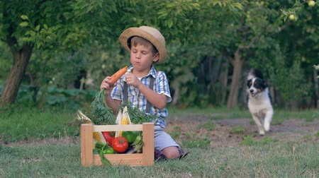 bakłażan : merry rural child eats carrot near active dog sitting beside wooden box with fresh veggies Wideo