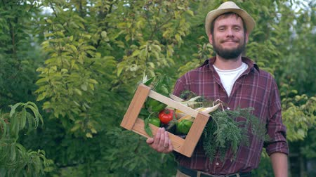 eggplant : vegetable business, country man holds wooden crate with organic products and corn in hand at the kitchen garden Stock Footage