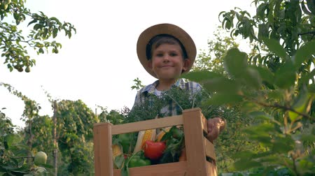 bakłażan : village child carries a wooden box with fresh vegetables in garden on a background of trees Wideo