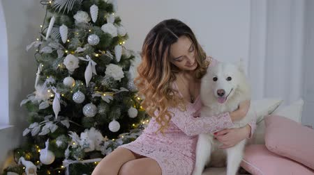 samoyed : christmas dog, cheerful young woman hugs and caresses a Samoyed hound on bed on background decorated Xmas tree Stock Footage